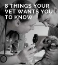 8 THINGS YOUR VET WANTS YOU TO KNOW