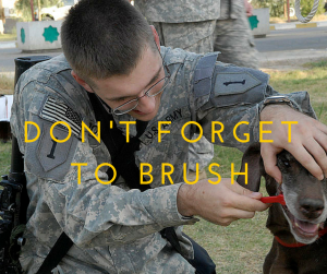 don't forget to brush your dog's teeth
